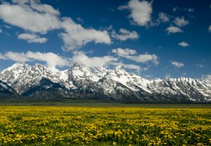 Jackson Hole Landscape Photography